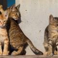 Streetcats Kuwait (Green Island 2013)